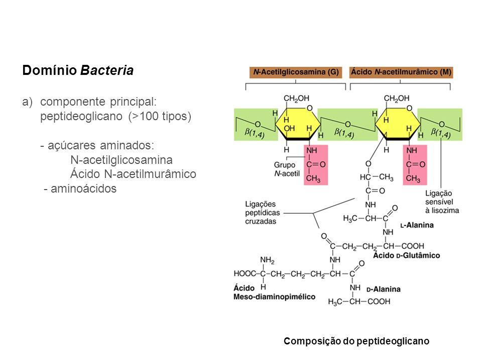 Composição do peptideoglicano Domínio Bacteria a)componente principal: peptideoglicano (>100 tipos) - açúcares aminados: N-acetilglicosamina Ácido N-a