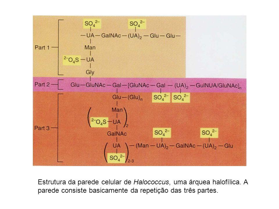 Estrutura da parede celular de Halococcus, uma árquea halofílica. A parede consiste basicamente da repetição das três partes.