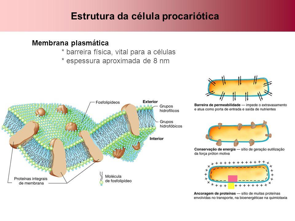 Estrutura da célula procariótica Membrana plasmática * barreira física, vital para a células * espessura aproximada de 8 nm