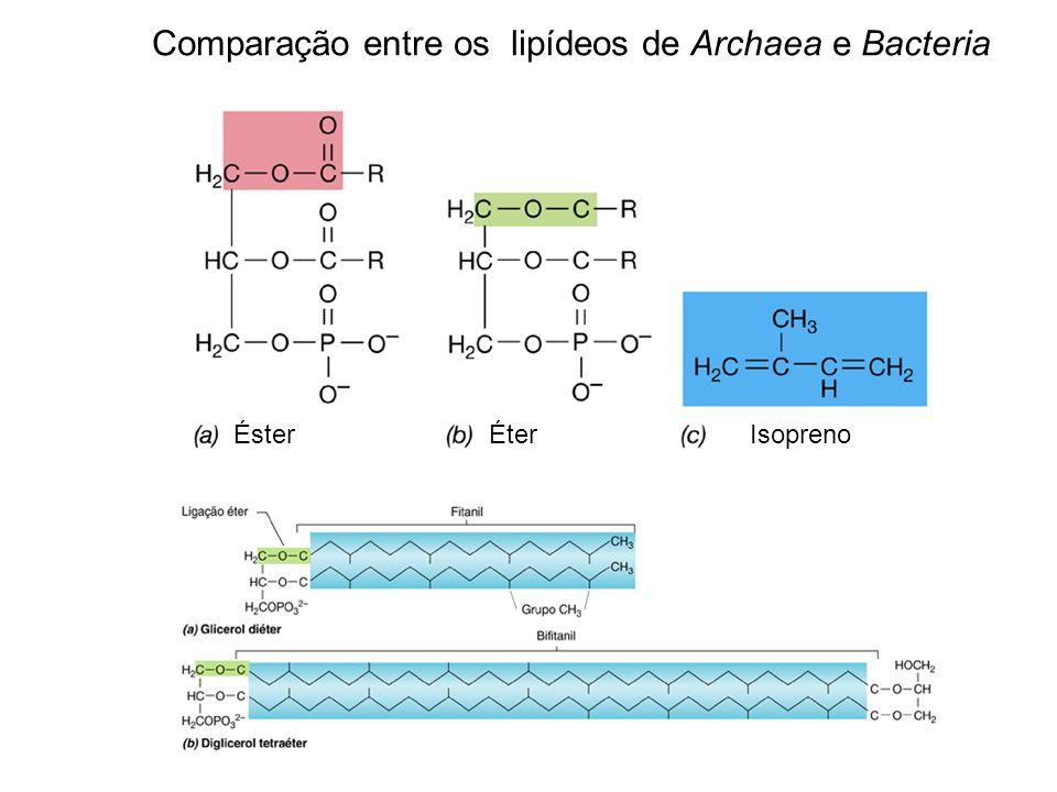 Éster Éter Isopreno Comparação entre os lipídeos de Archaea e Bacteria