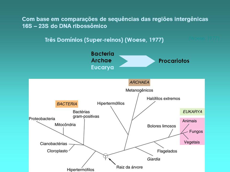 Com base em comparações de sequências das regiões intergênicas 16S – 23S do DNA ribossômico Três Domínios (Super-reinos) (Woese, 1977) Bacteria Archae