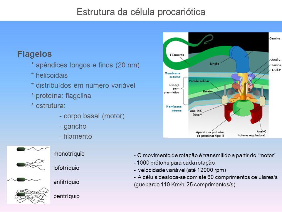 Estrutura da célula procariótica Flagelos * apêndices longos e finos (20 nm) * helicoidais * distribuídos em número variável * proteína: flagelina * e
