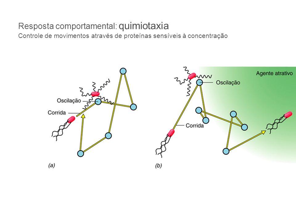 Resposta comportamental: quimiotaxia Controle de movimentos através de proteínas sensíveis à concentração