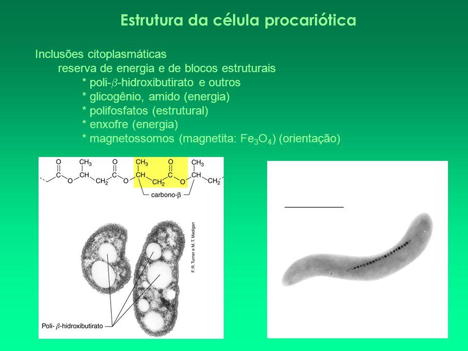 Inclusões citoplasmáticas reserva de energia e de blocos estruturais * poli- -hidroxibutirato e outros * glicogênio, amido (energia) * polifosfatos (e