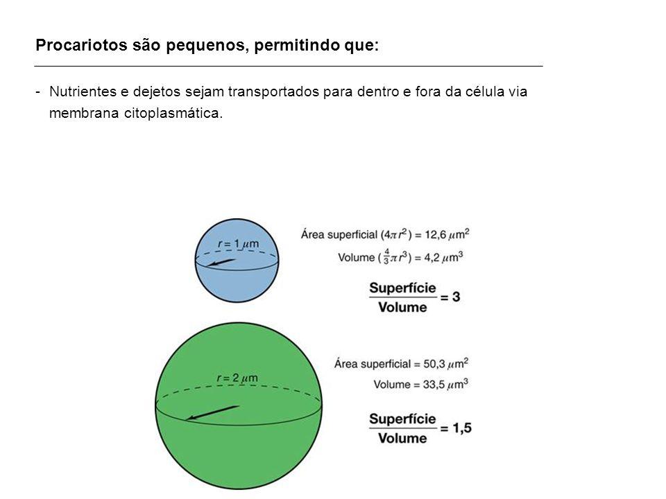 Procariotos são pequenos, permitindo que: -Nutrientes e dejetos sejam transportados para dentro e fora da célula via membrana citoplasmática.