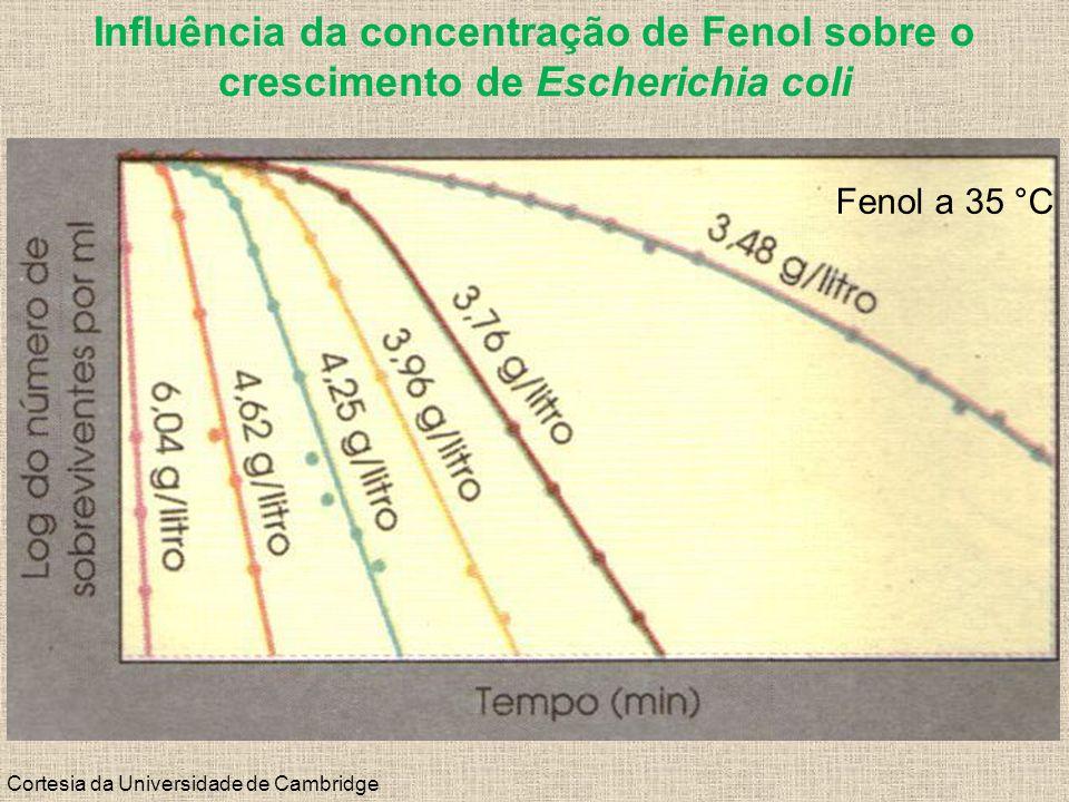 Influência da concentração de Fenol sobre o crescimento de Escherichia coli Cortesia da Universidade de Cambridge Fenol a 35 °C