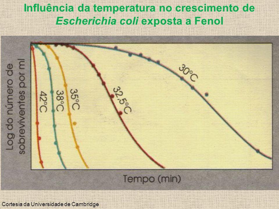 Cortesia da Universidade de Cambridge Influência da temperatura no crescimento de Escherichia coli exposta a Fenol