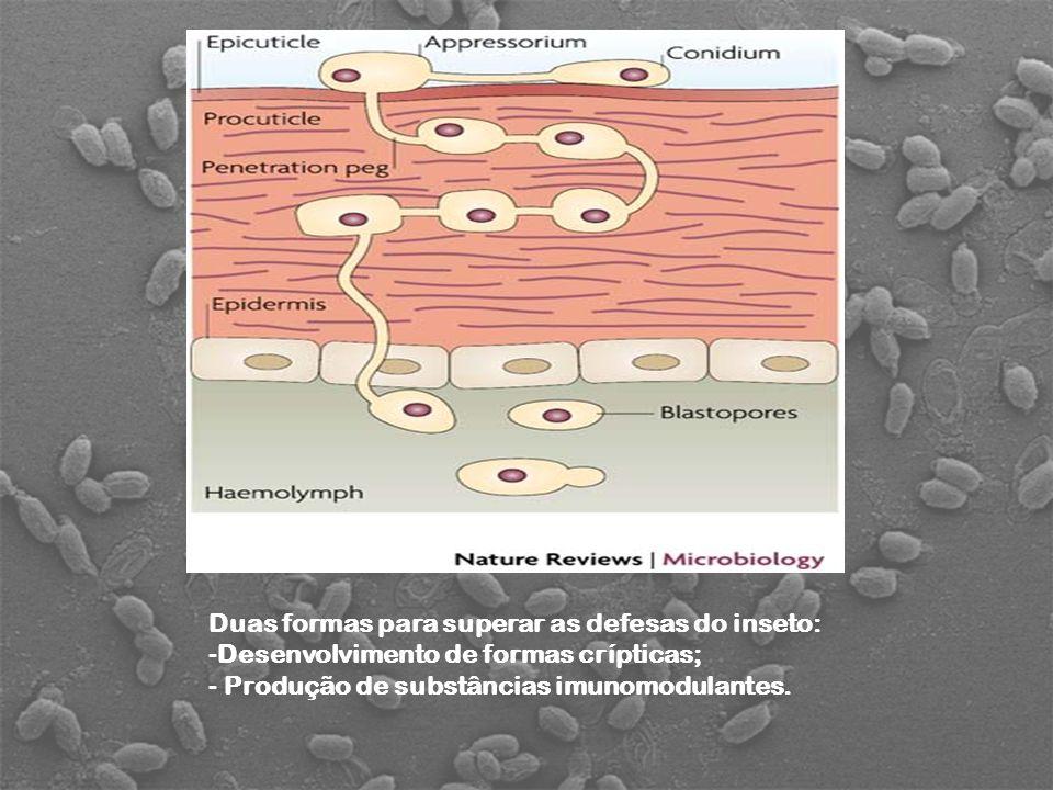 Duas formas para superar as defesas do inseto: -Desenvolvimento de formas crípticas; - Produção de substâncias imunomodulantes.