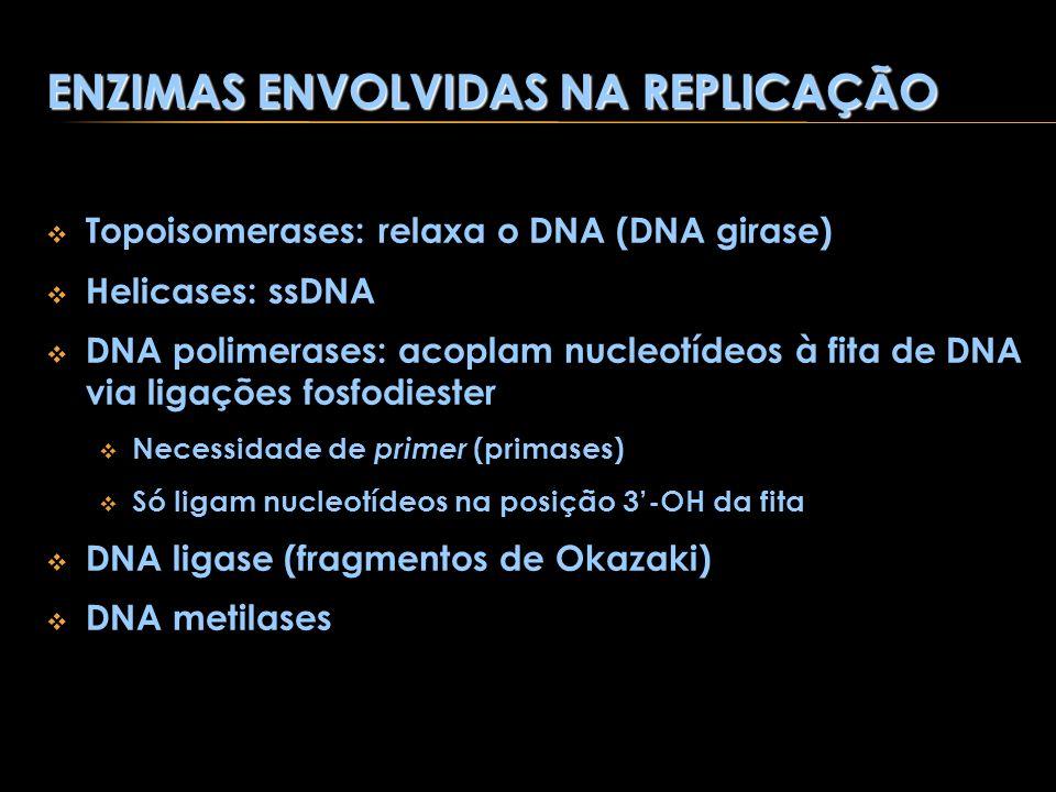 ENZIMAS ENVOLVIDAS NA REPLICAÇÃO Topoisomerases: relaxa o DNA (DNA girase) Helicases: ssDNA DNA polimerases: acoplam nucleotídeos à fita de DNA via li