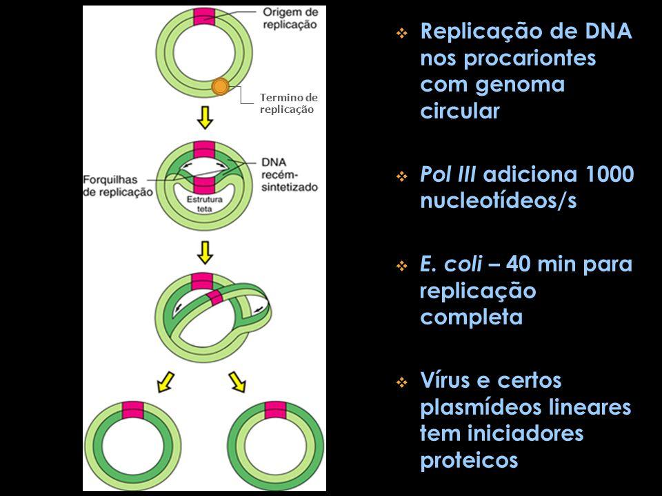 Replicação de DNA nos procariontes com genoma circular Pol III adiciona 1000 nucleotídeos/s E. coli – 40 min para replicação completa Vírus e certos p