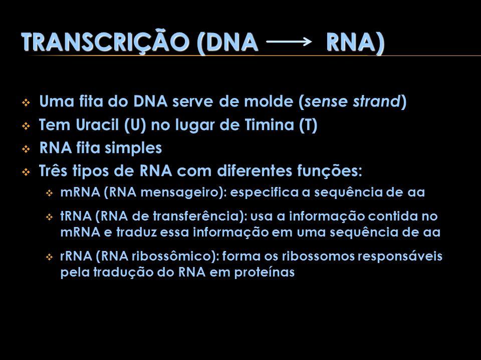 TRANSCRIÇÃO (DNA RNA) Uma fita do DNA serve de molde ( sense strand ) Tem Uracil (U) no lugar de Timina (T) RNA fita simples Três tipos de RNA com dif