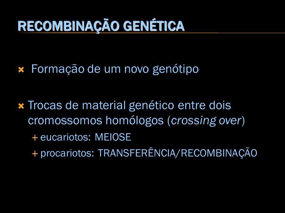 RECOMBINAÇÃO GENÉTICA Formação de um novo genótipo Trocas de material genético entre dois cromossomos homólogos (crossing over) eucariotos: MEIOSE pro