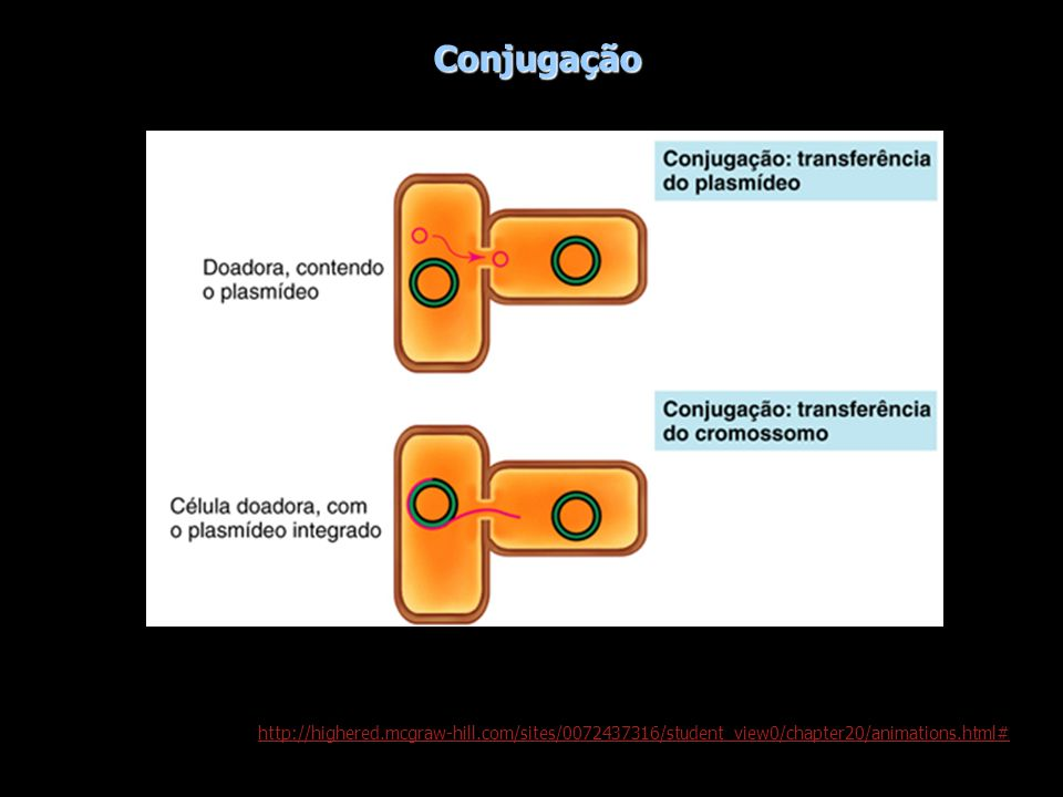 Conjugação http://highered.mcgraw-hill.com/sites/0072437316/student_view0/chapter20/animations.html#