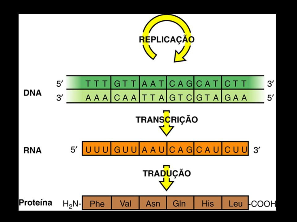 Garfo de replicação (eucariotos)