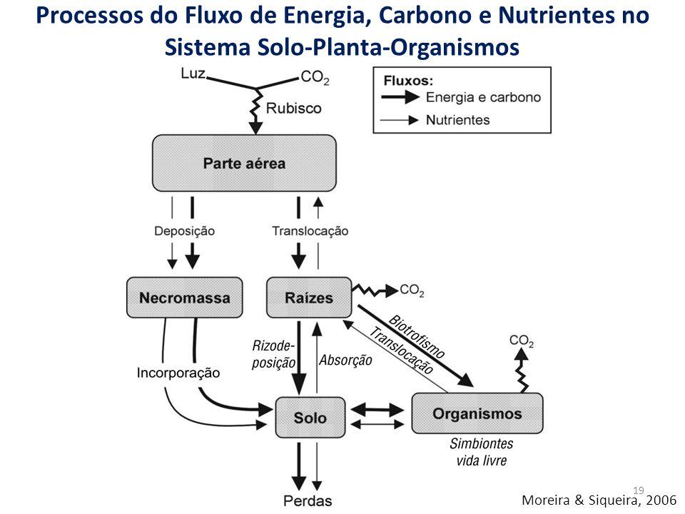 Processos do Fluxo de Energia, Carbono e Nutrientes no Sistema Solo-Planta-Organismos Moreira & Siqueira, 2006 19