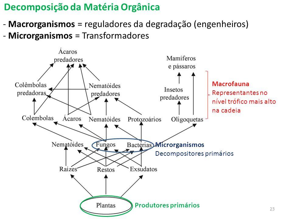 Decomposição da Matéria Orgânica - Macrorganismos = reguladores da degradação (engenheiros) - Microrganismos = Transformadores Macrofauna Representant