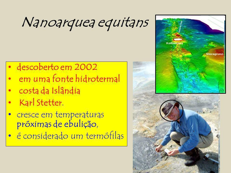 Nanoarquea equitans descoberto em 2002 em uma fonte hidrotermal costa da Islândia Karl Stetter.