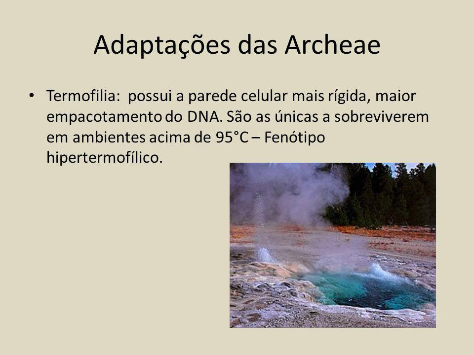 Adaptações das Archeae Termofilia: possui a parede celular mais rígida, maior empacotamento do DNA.