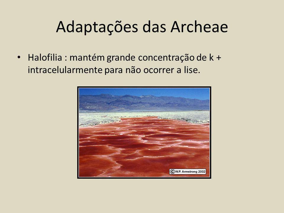 Adaptações das Archeae Halofilia : mantém grande concentração de k + intracelularmente para não ocorrer a lise.