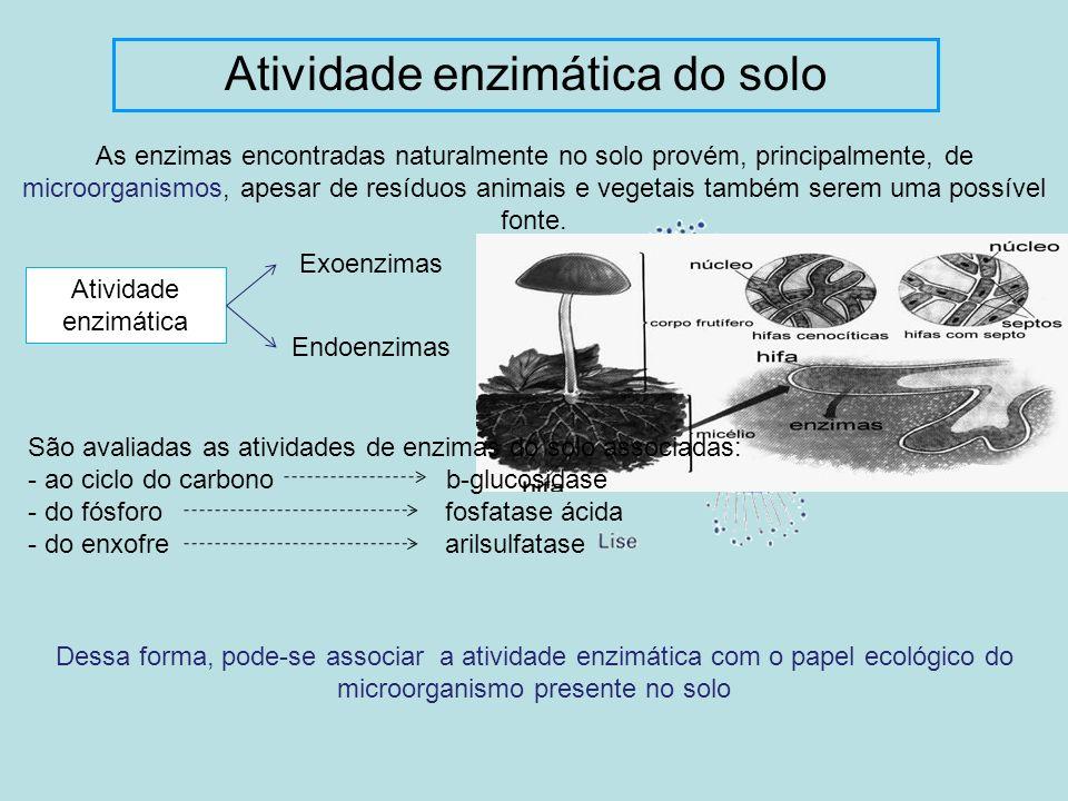 Atividade enzimática do solo As enzimas encontradas naturalmente no solo provém, principalmente, de microorganismos, apesar de resíduos animais e vege