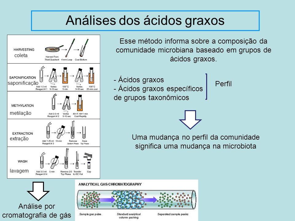 Análises dos ácidos graxos Esse método informa sobre a composição da comunidade microbiana baseado em grupos de ácidos graxos. Análise por cromatograf