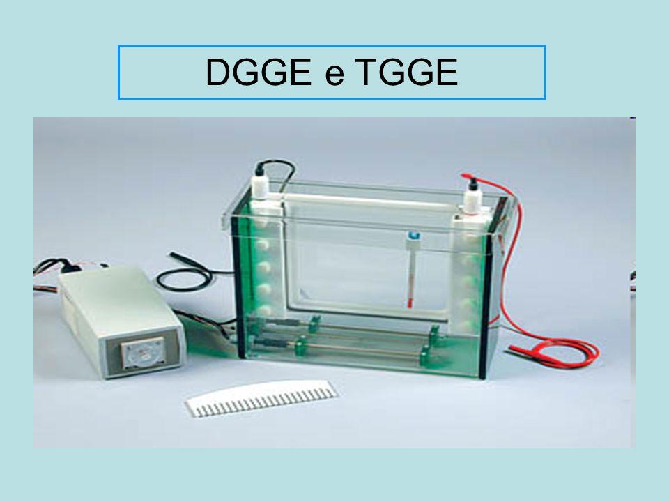 DGGE e TGGE