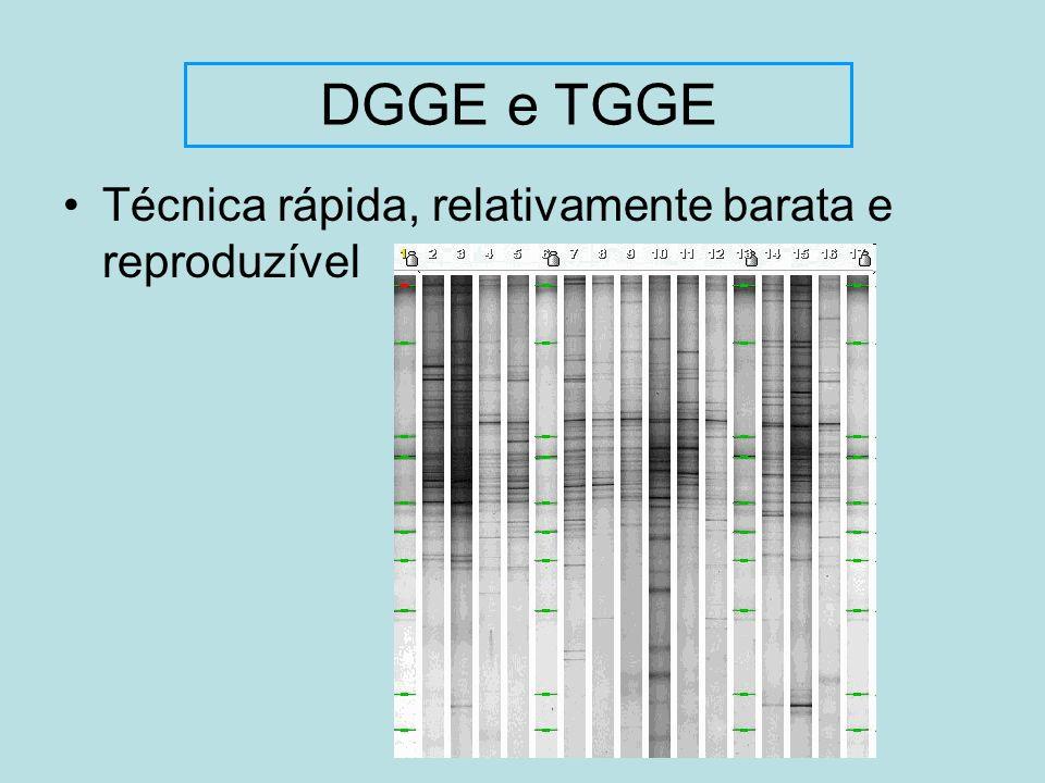 Técnica rápida, relativamente barata e reproduzível DGGE e TGGE
