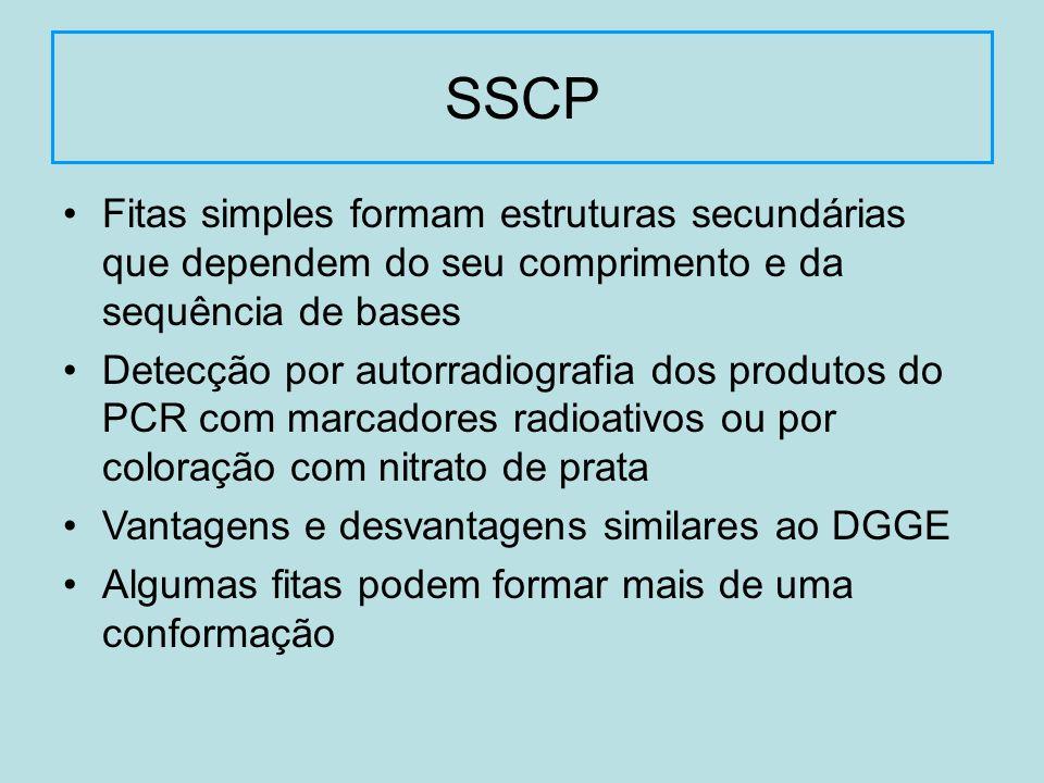 Fitas simples formam estruturas secundárias que dependem do seu comprimento e da sequência de bases Detecção por autorradiografia dos produtos do PCR