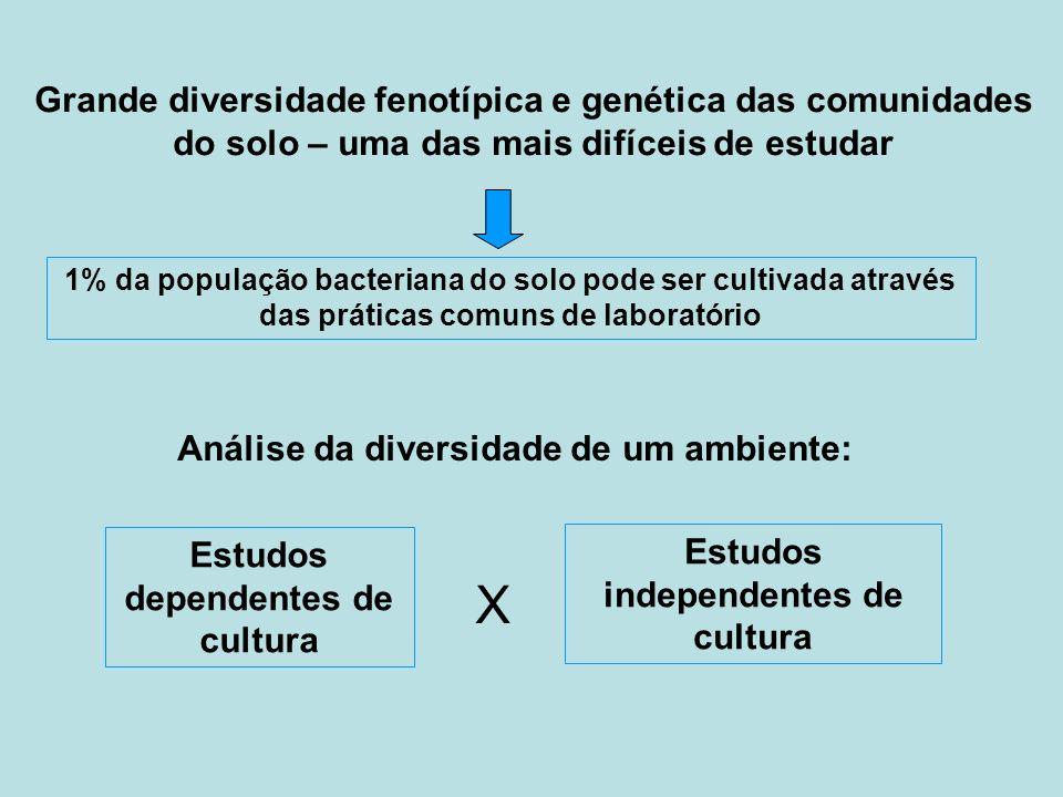 1% da população bacteriana do solo pode ser cultivada através das práticas comuns de laboratório Grande diversidade fenotípica e genética das comunida