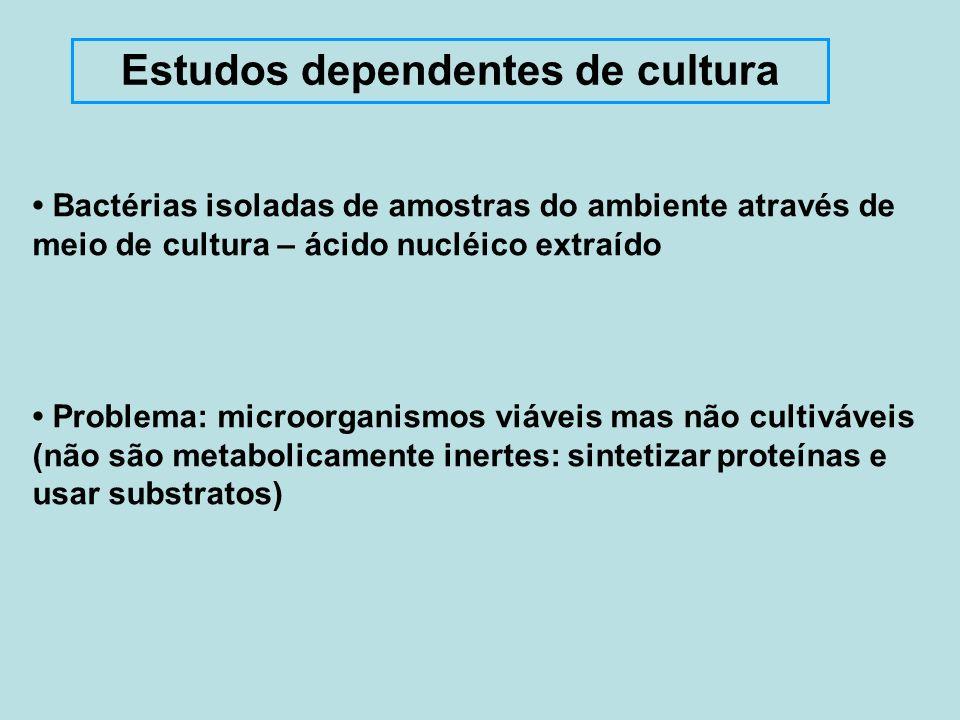 São limitados - apenas bactérias que podem ser cultivadas Não refletem a real estrutura da comunidade microbiana Estudos dependentes de cultura Maioria das bactérias será excluída quando diversidade for estimada