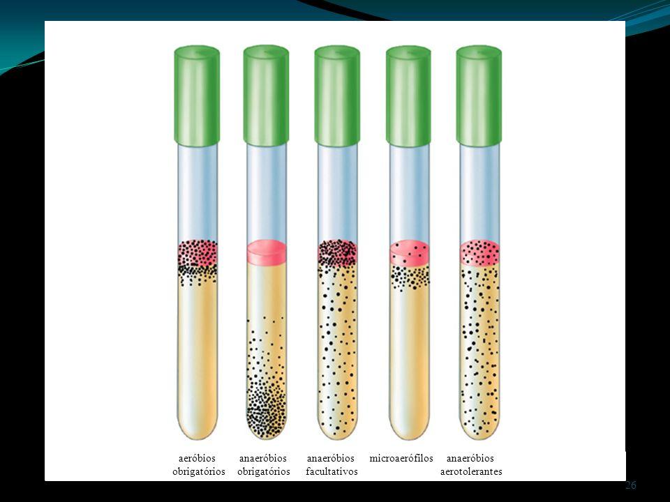 aeróbios anaeróbios anaeróbios microaerófilos anaeróbios obrigatórios obrigatórios facultativos aerotolerantes 26
