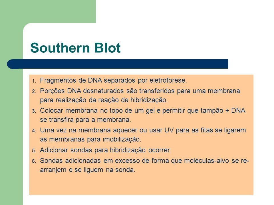 Southern Blot 1. Fragmentos de DNA separados por eletroforese. 2. Porções DNA desnaturados são transferidos para uma membrana para realização da reaçã