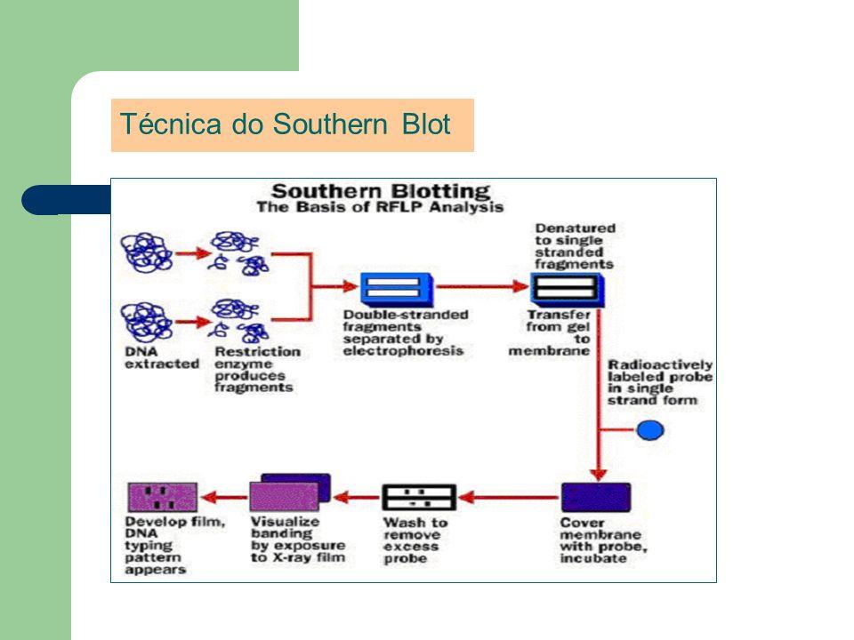 Técnica do Southern Blot