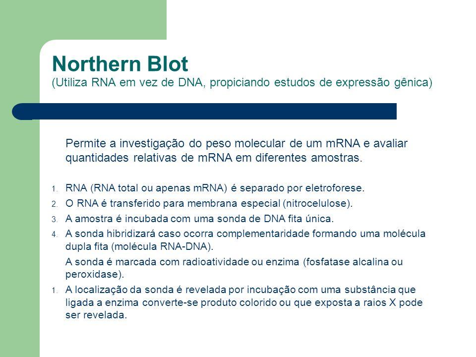 Northern Blot (Utiliza RNA em vez de DNA, propiciando estudos de expressão gênica) Permite a investigação do peso molecular de um mRNA e avaliar quant