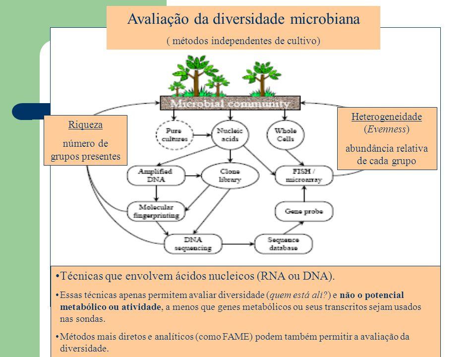 Avaliação da diversidade microbiana ( métodos independentes de cultivo) Riqueza número de grupos presentes Heterogeneidade (Evenness) abundância relat