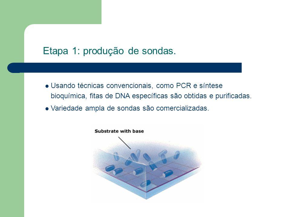 Etapa 1: produção de sondas. Usando técnicas convencionais, como PCR e síntese bioquímica, fitas de DNA específicas são obtidas e purificadas. Varieda