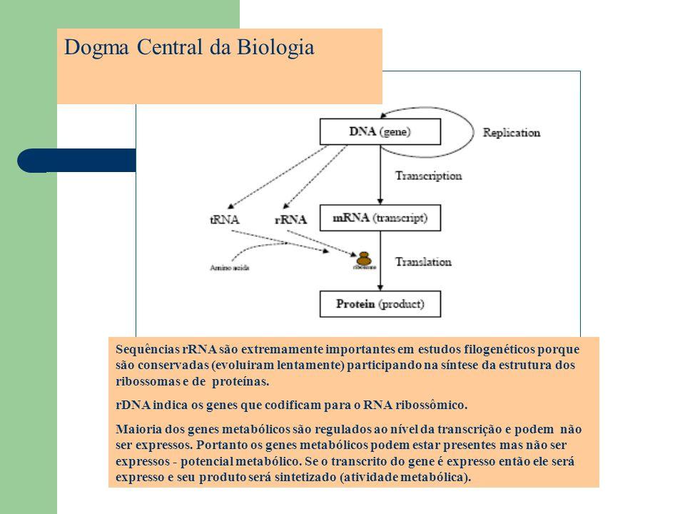 Dogma Central da Biologia Sequências rRNA são extremamente importantes em estudos filogenéticos porque são conservadas (evoluiram lentamente) particip