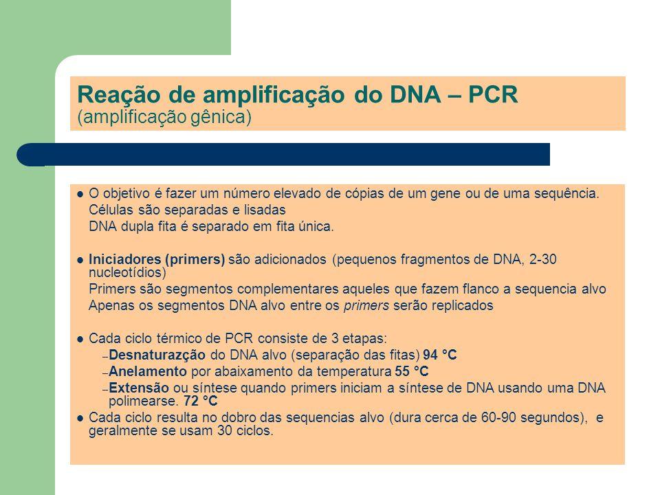 Reação de amplificação do DNA – PCR (amplificação gênica) O objetivo é fazer um número elevado de cópias de um gene ou de uma sequência. Células são s