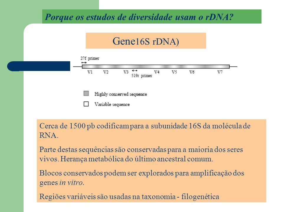 Cerca de 1500 pb codificam para a subunidade 16S da molécula de RNA. Parte destas sequências são conservadas para a maioria dos seres vivos. Herança m