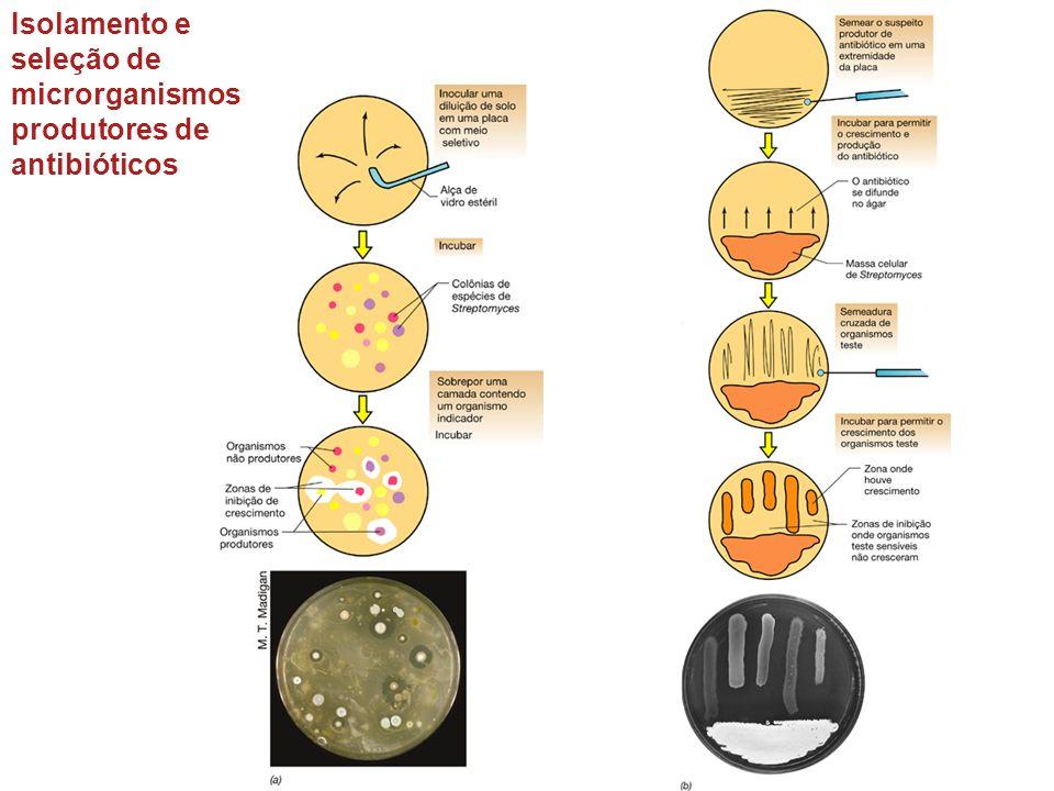 Isolamento e seleção de microrganismos produtores de antibióticos