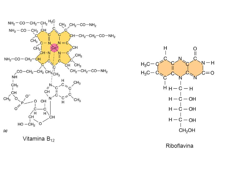 Vitamina B 12 Riboflavina
