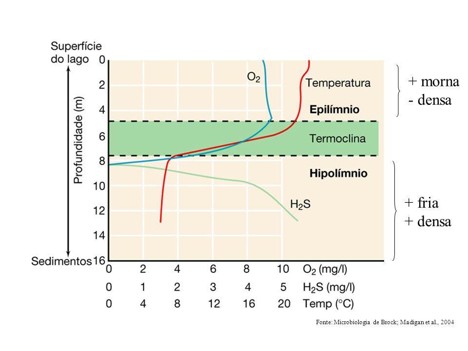 Nutrientes orgânicos e inorgânicos –nitratos e fosfatos: »algas eutrofização O 2 crescimento de outros organismos carga de nutrientes: quantidade de nutrientes –águas próximas à praia: variável (esgôtos) –águas de mar aberto: estável e baixa »baixo fitoplâncton (baixo N e Fe) »baixa atividade heterotrófica »atividade fotossintetizante: cianobactérias efluentes industriais: presença de antimicrobianos »alguns microrganismos convertem tais substâncias em formas menos nocivas: Pseudomonas spp.: metil mercúrio mercúrio (volátil) O ambiente aquático