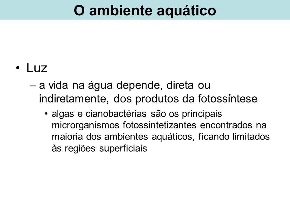 Lago: - fototróficos predominantes: microrganismos zonas óxicas: cianobactérias e algas zonas anóxicas: bactérias fototróficas anaeróbias PRODUTORES PRIMÁRIOS taxas de produção primária atividade microbiana