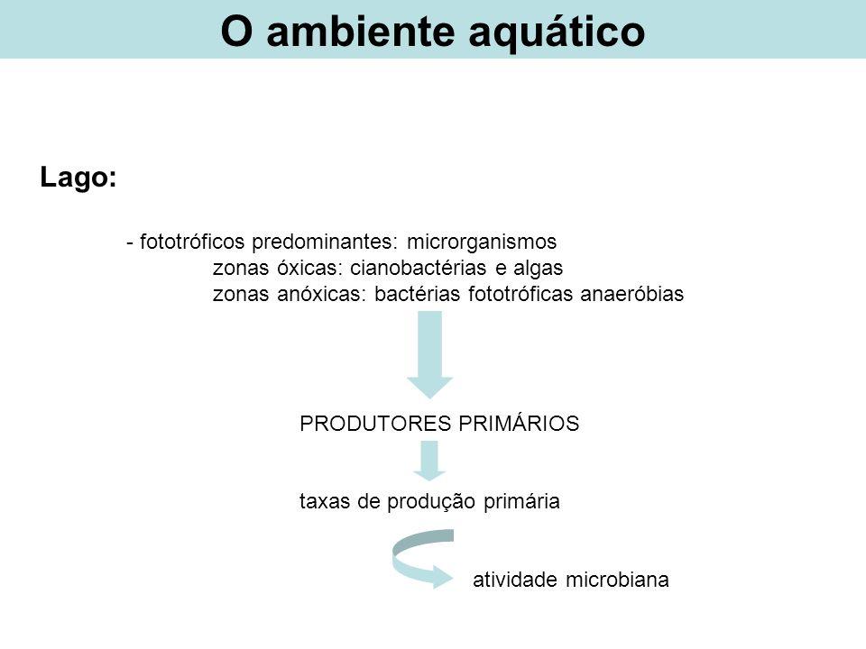 Doenças relacionadas a água Pseudomonas aeruginosa – bactéria Gram negativa Sintomas: prurido generalizado pelo corpo Disseminação: água contaminada.
