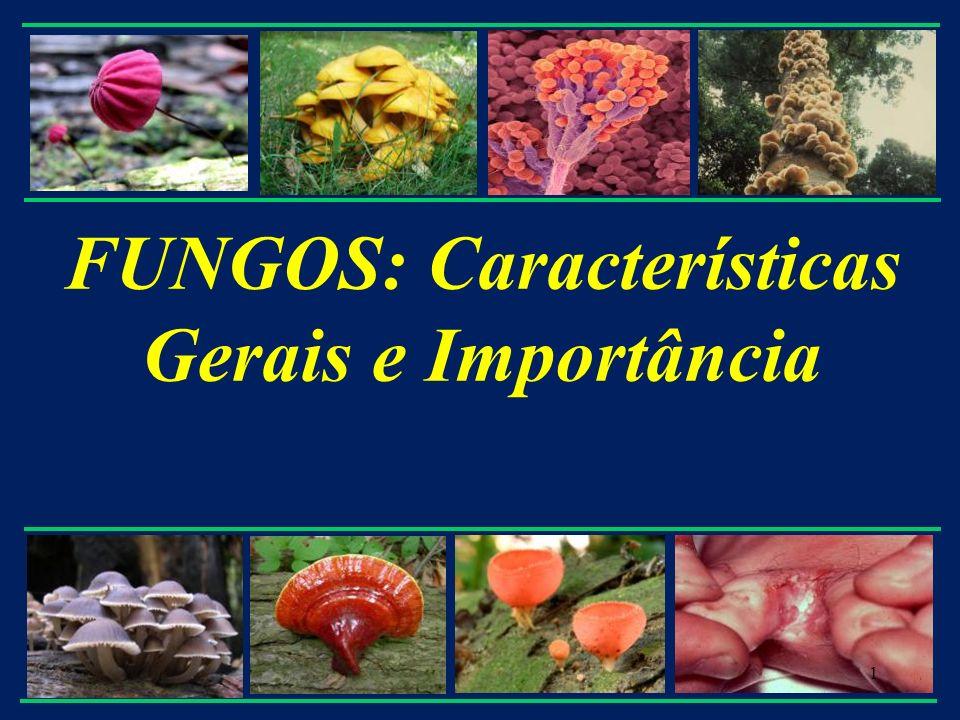 5.4 Filo Chytridiomycota Chytridion significa pequeno pote em grego - Habitat * maioria vivem na água e no solo * trato digestivo de mamíferos herbívoros - Modo de vida * saprófitas: (maioria) invasores primários de matéria orgânica * parasitas: - plantas - insetos - anfíbios - fungos * simbiontes (anaeróbios do rúmen) - Maioria cenocíticos, alguns unicelulares - Reprodução: * assexual por zoósporos com um único flagelo * sexual: fusão de gametas (zoósporos) e meiose zigótica