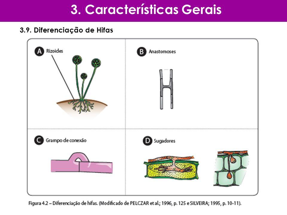 3.9. Diferenciação de Hifas 3. Características Gerais
