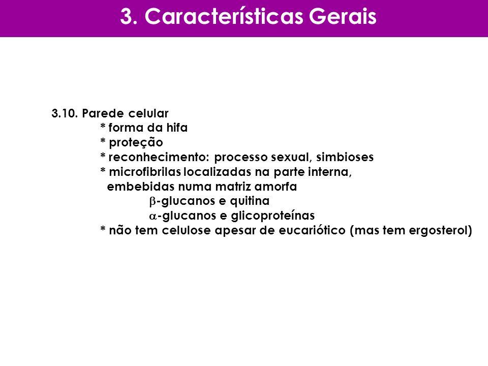 3.10. Parede celular * forma da hifa * proteção * reconhecimento: processo sexual, simbioses * microfibrilas localizadas na parte interna, embebidas n