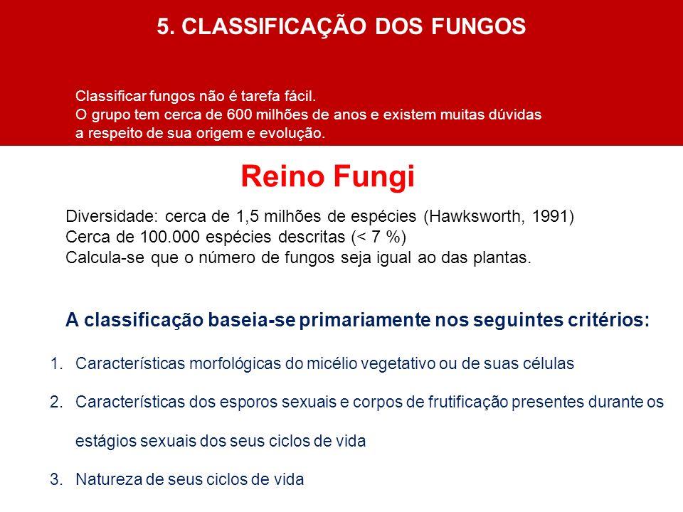 Reino Fungi A classificação baseia-se primariamente nos seguintes critérios: 1.Características morfológicas do micélio vegetativo ou de suas células 2
