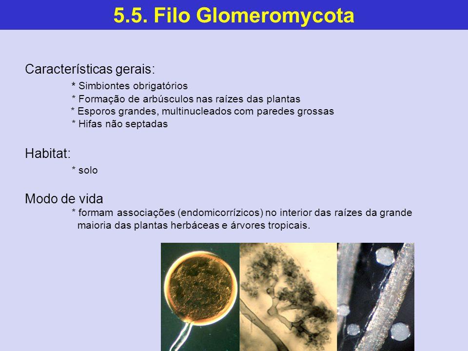 5.5. Filo Glomeromycota Características gerais: * Simbiontes obrigatórios * Formação de arbúsculos nas raízes das plantas * Esporos grandes, multinucl