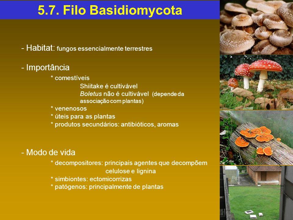 - Habitat: fungos essencialmente terrestres - Importância * comestíveis Shiitake é cultivável Boletus não é cultivável (depende da associação com plan